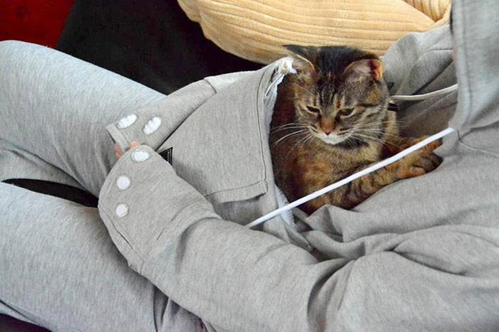 Trời lạnh thế này, có boss ngoan ngoãn nằm ở bụng sưởi ấm thì còn gì tuyệt bằng - Ảnh 4.