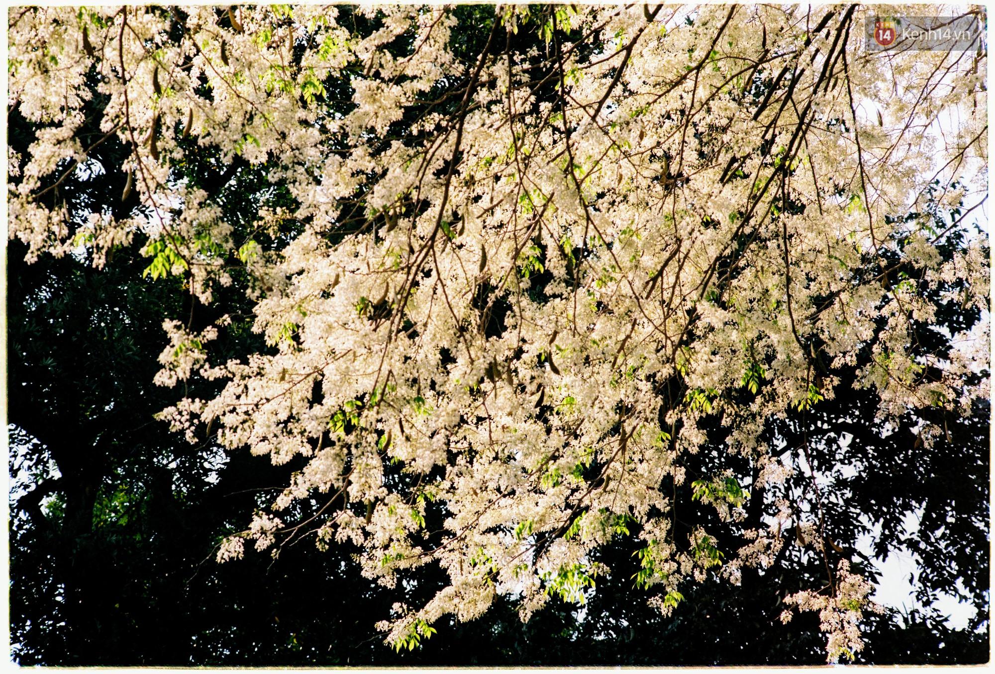 Hà Nội những ngày se lạnh, nắng đẹp và lá đỏ rợp góc phố - Ảnh 8.