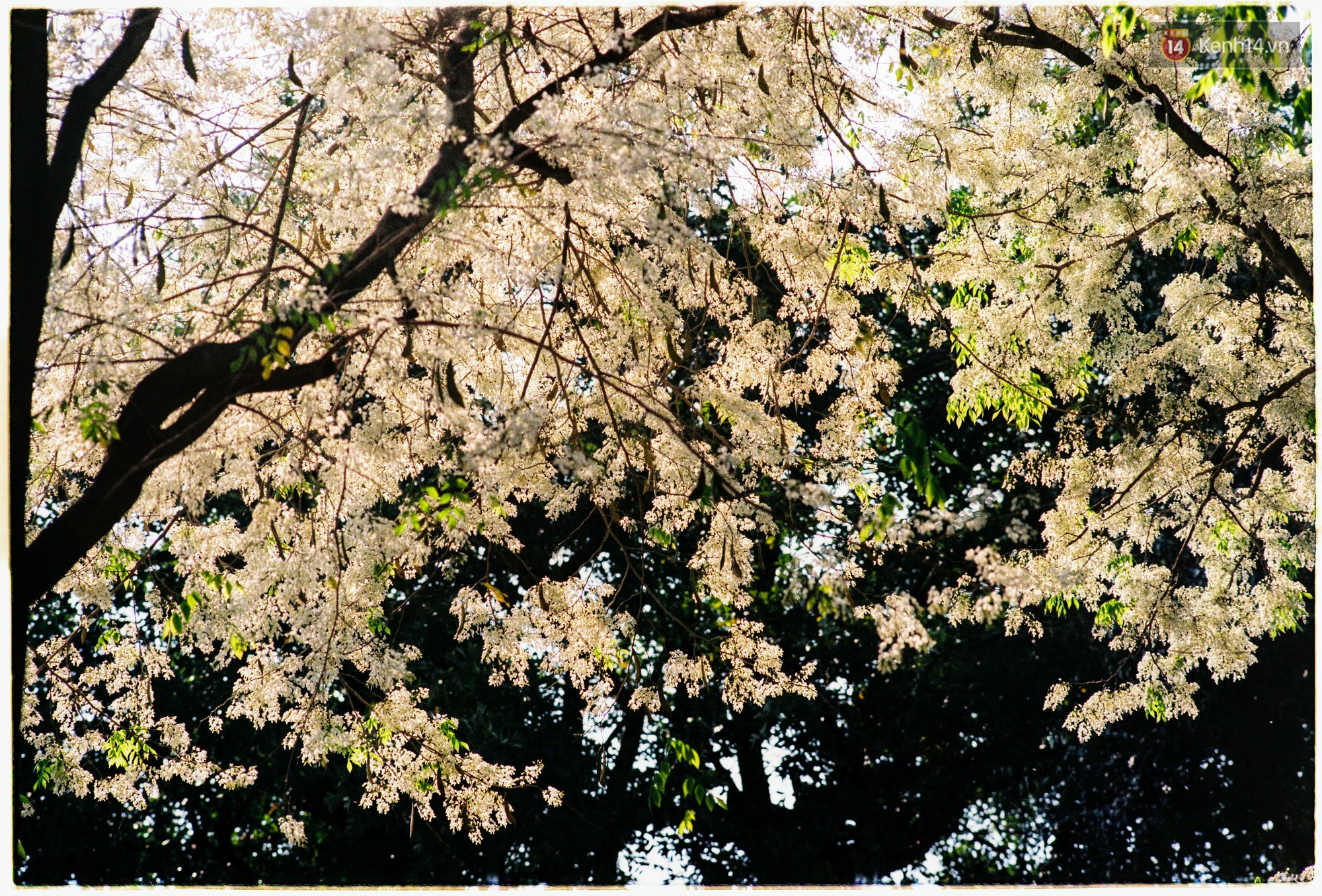 Hà Nội những ngày se lạnh, nắng đẹp và lá đỏ rợp góc phố - Ảnh 6.