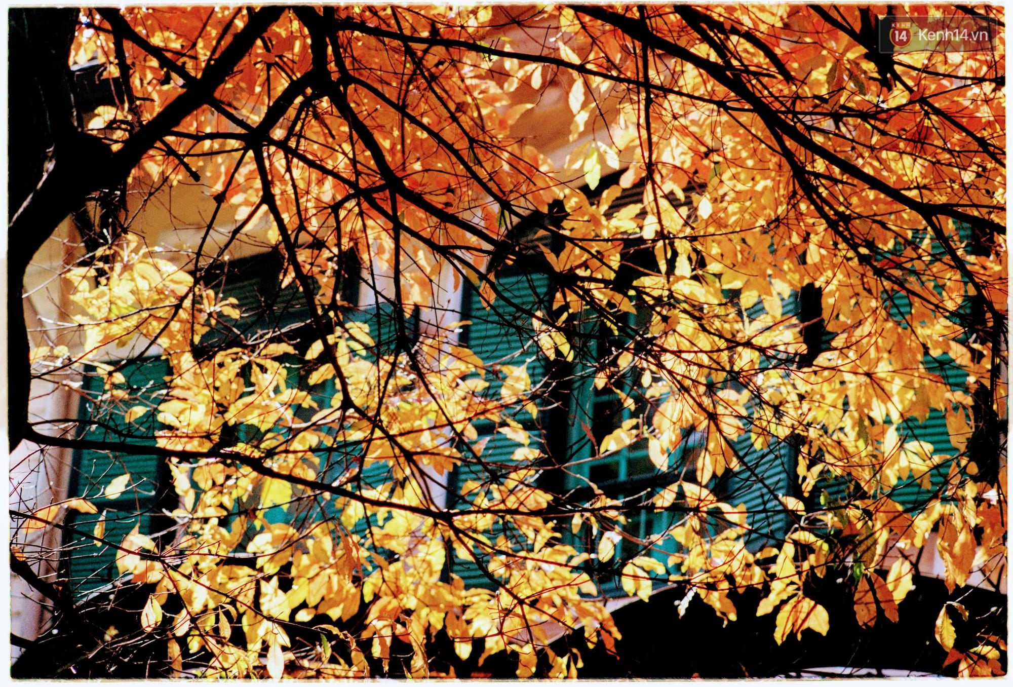 Hà Nội những ngày se lạnh, nắng đẹp và lá đỏ rợp góc phố - Ảnh 3.