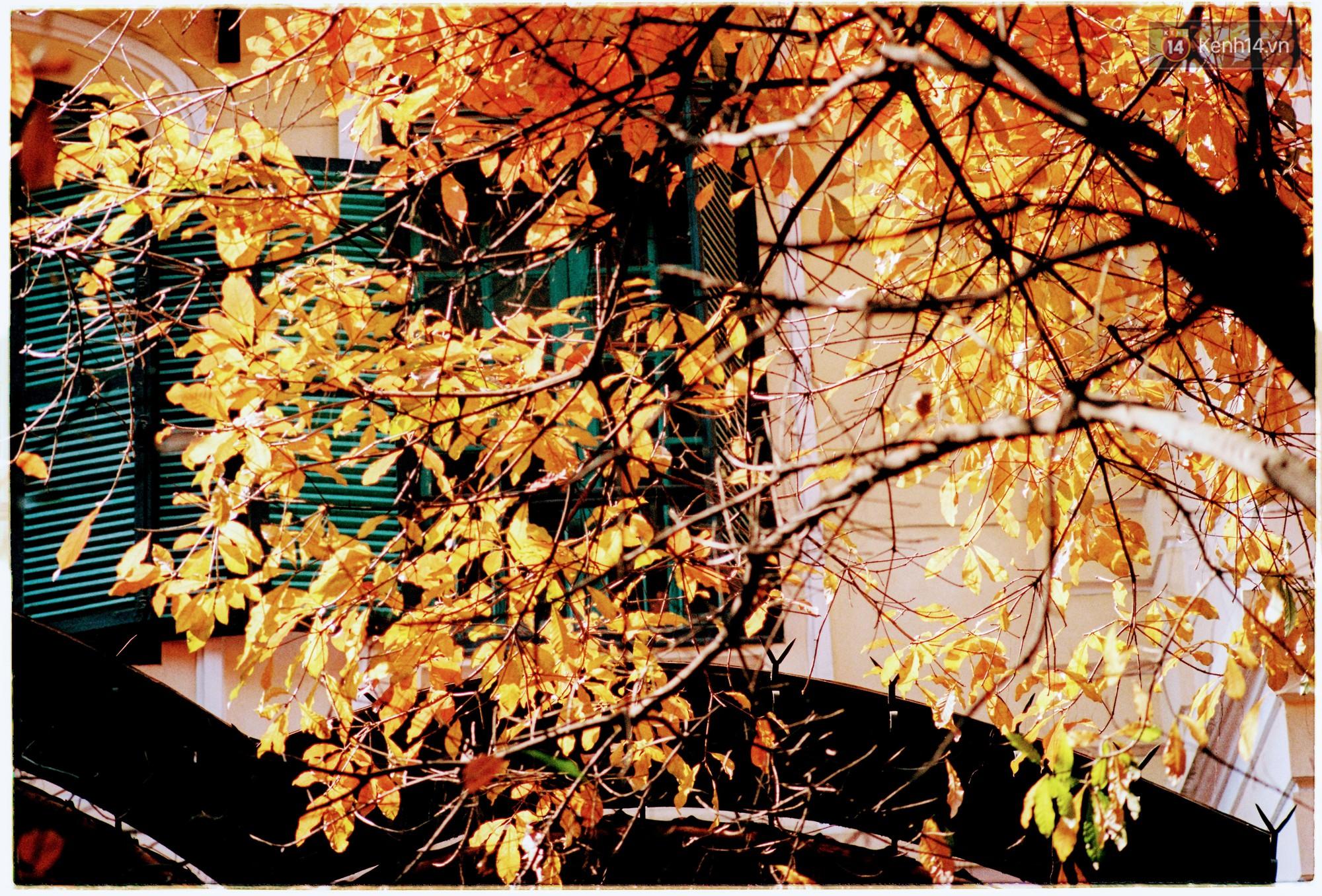 Hà Nội những ngày se lạnh, nắng đẹp và lá đỏ rợp góc phố - Ảnh 11.