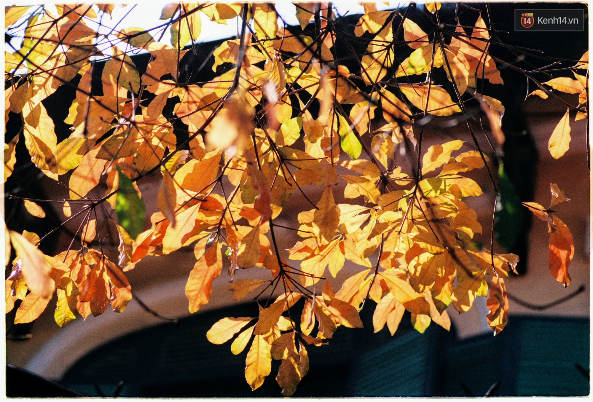 Hà Nội những ngày se lạnh, nắng đẹp và lá đỏ rợp góc phố - Ảnh 12.