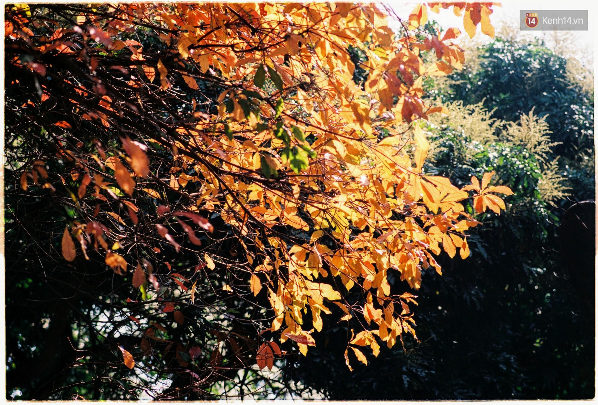 Hà Nội những ngày se lạnh, nắng đẹp và lá đỏ rợp góc phố - Ảnh 13.