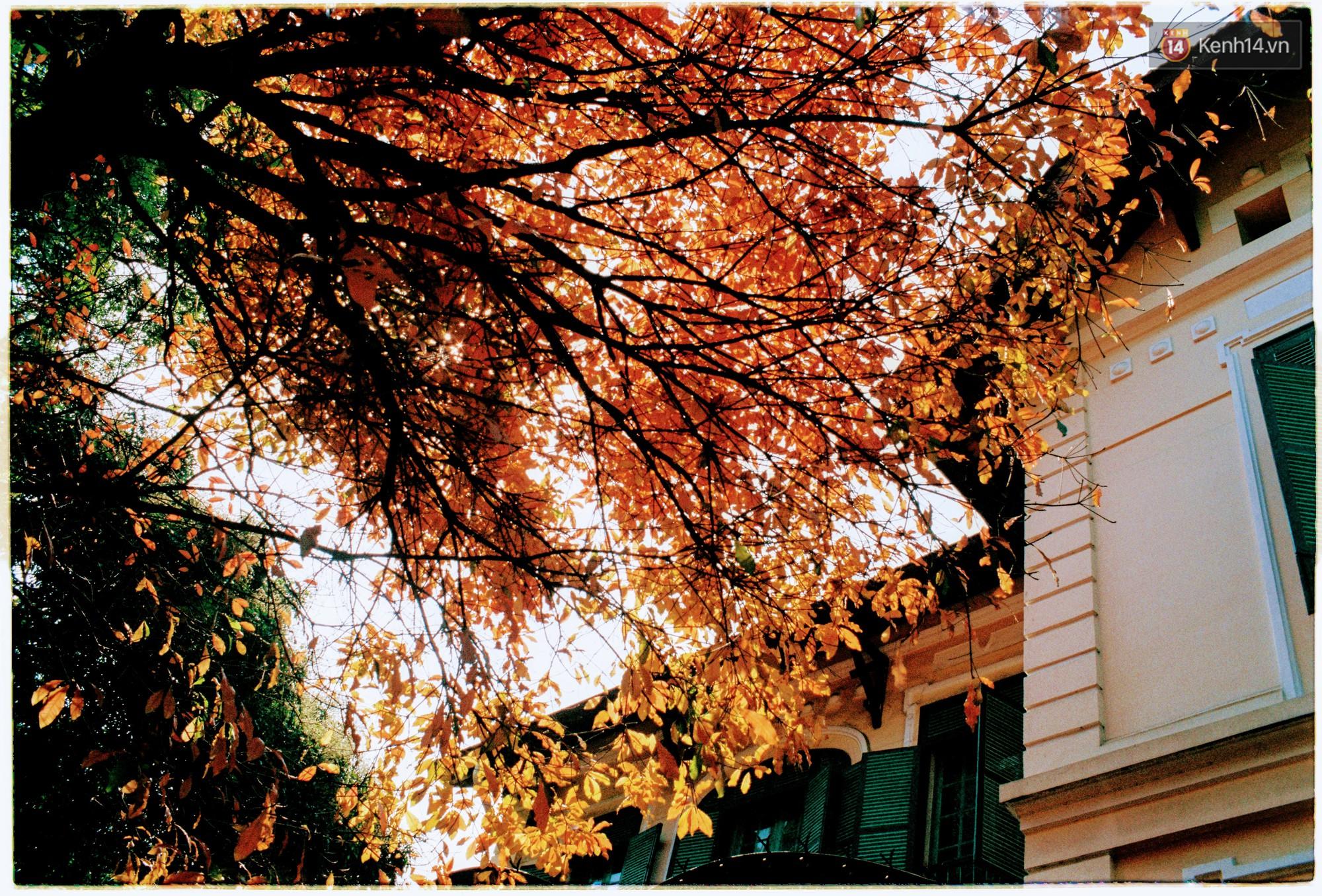 Hà Nội những ngày se lạnh, nắng đẹp và lá đỏ rợp góc phố - Ảnh 14.