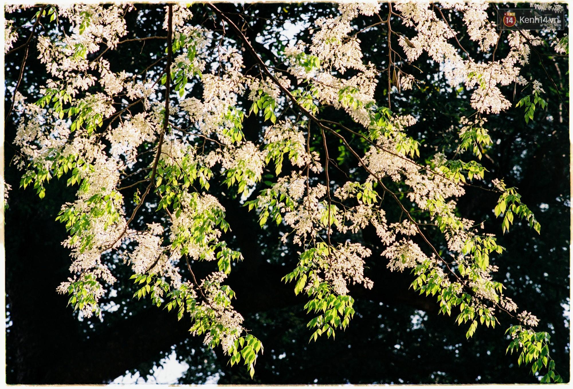 Hà Nội những ngày se lạnh, nắng đẹp và lá đỏ rợp góc phố - Ảnh 7.