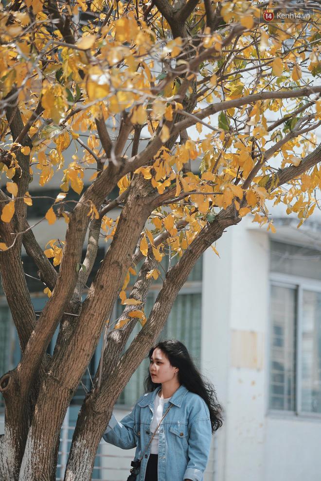 Bách Khoa, Sư Phạm mùa cây thay lá, đẹp dịu dàng như thu ở trời Âu - Ảnh 6.