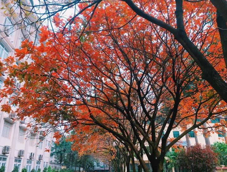 Bách Khoa, Sư Phạm mùa cây thay lá, đẹp dịu dàng như thu ở trời Âu - Ảnh 16.