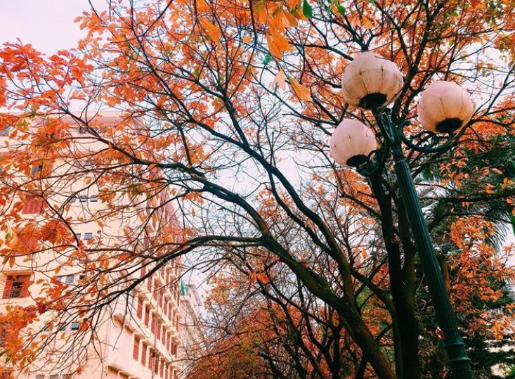 Bách Khoa, Sư Phạm mùa cây thay lá, đẹp dịu dàng như thu ở trời Âu - Ảnh 17.