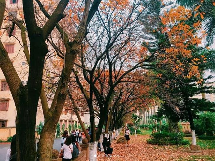 Bách Khoa, Sư Phạm mùa cây thay lá, đẹp dịu dàng như thu ở trời Âu - Ảnh 18.