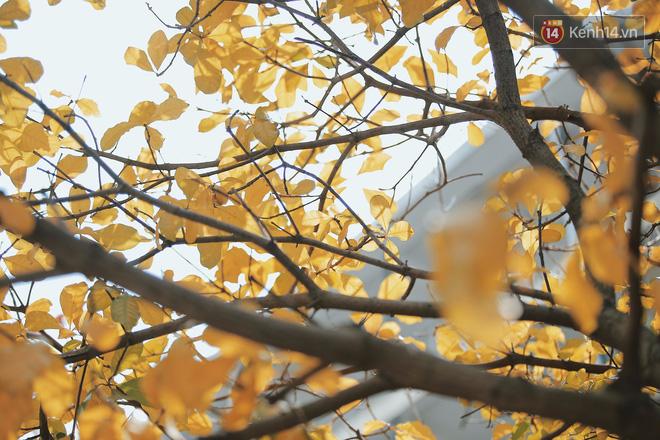 Bách Khoa, Sư Phạm mùa cây thay lá, đẹp dịu dàng như thu ở trời Âu - Ảnh 3.