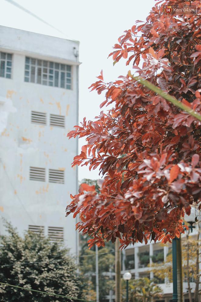 Bách Khoa, Sư Phạm mùa cây thay lá, đẹp dịu dàng như thu ở trời Âu - Ảnh 4.