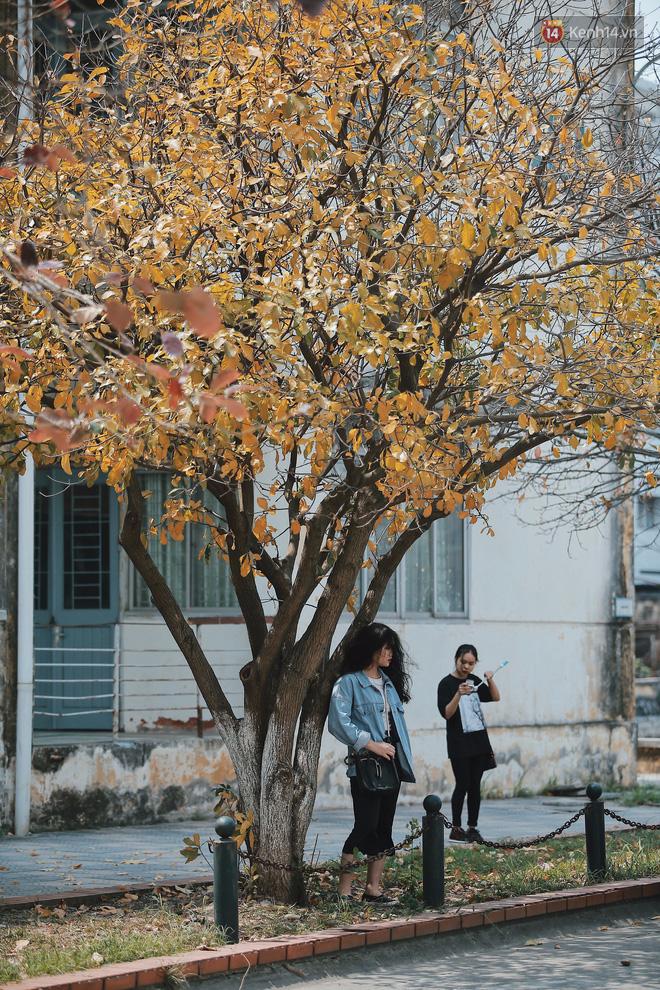 Bách Khoa, Sư Phạm mùa cây thay lá, đẹp dịu dàng như thu ở trời Âu - Ảnh 5.