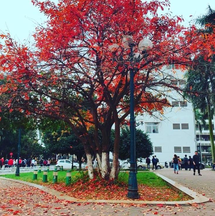 Bách Khoa, Sư Phạm mùa cây thay lá, đẹp dịu dàng như thu ở trời Âu - Ảnh 14.