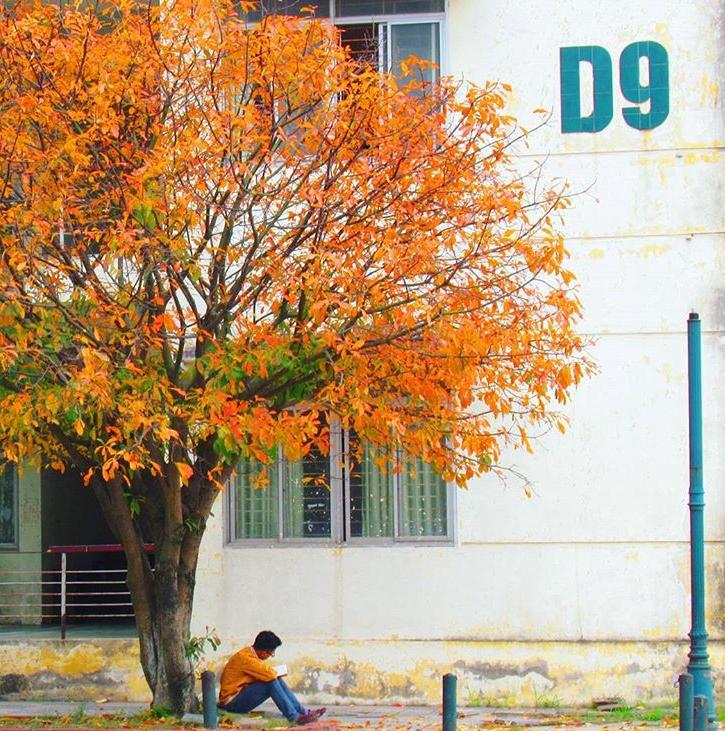 Bách Khoa, Sư Phạm mùa cây thay lá, đẹp dịu dàng như thu ở trời Âu - Ảnh 12.