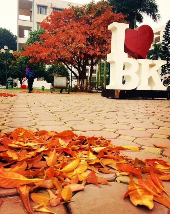 Bách Khoa, Sư Phạm mùa cây thay lá, đẹp dịu dàng như thu ở trời Âu - Ảnh 15.