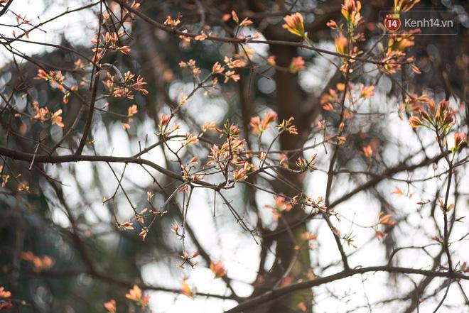 Bách Khoa, Sư Phạm mùa cây thay lá, đẹp dịu dàng như thu ở trời Âu - Ảnh 20.