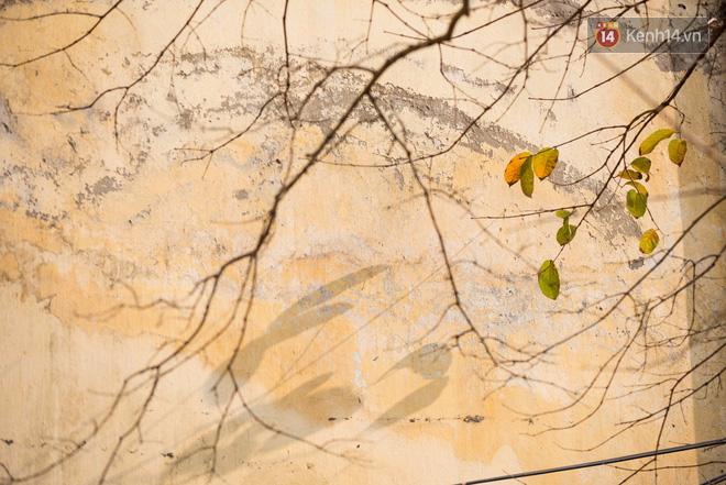 Bách Khoa, Sư Phạm mùa cây thay lá, đẹp dịu dàng như thu ở trời Âu - Ảnh 23.