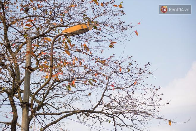 Bách Khoa, Sư Phạm mùa cây thay lá, đẹp dịu dàng như thu ở trời Âu - Ảnh 22.