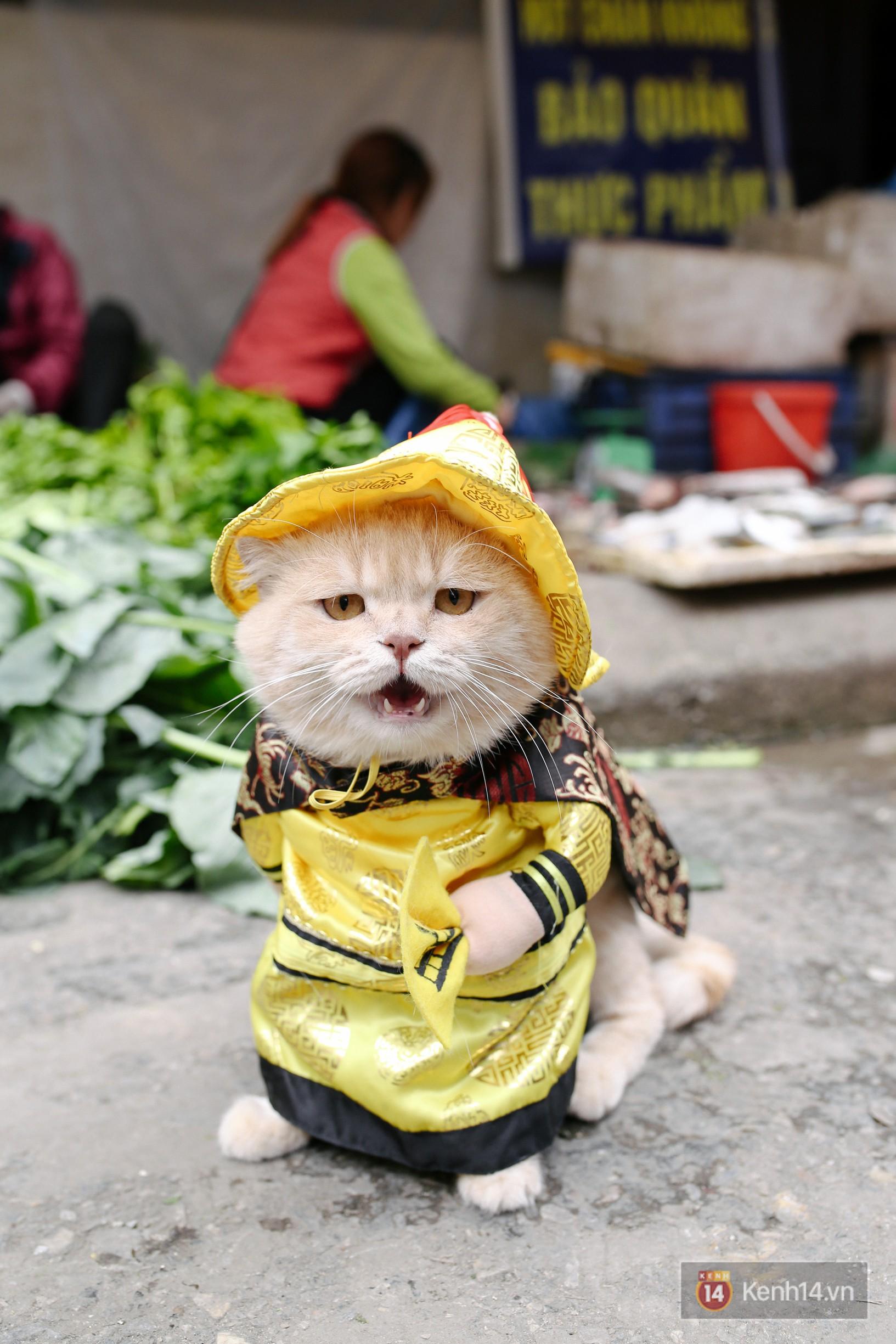 """Về Hải Phòng """"diện kiến"""" chú mèo tên Chó và cậu chủ siêu cute đang nổi danh khắp MXH tây ta - Ảnh 8."""