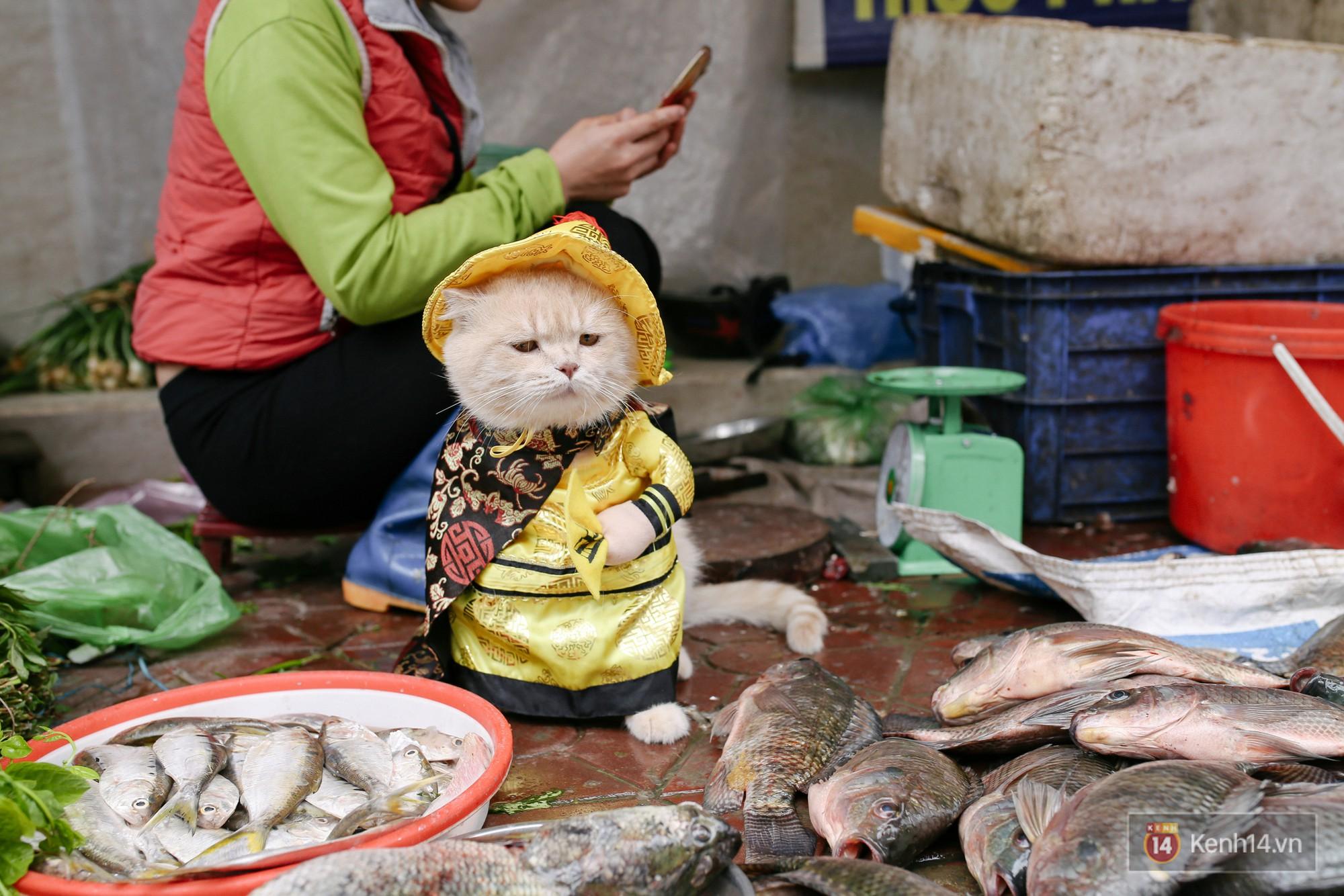 """Về Hải Phòng """"diện kiến"""" chú mèo tên Chó và cậu chủ siêu cute đang nổi danh khắp MXH tây ta - Ảnh 7."""