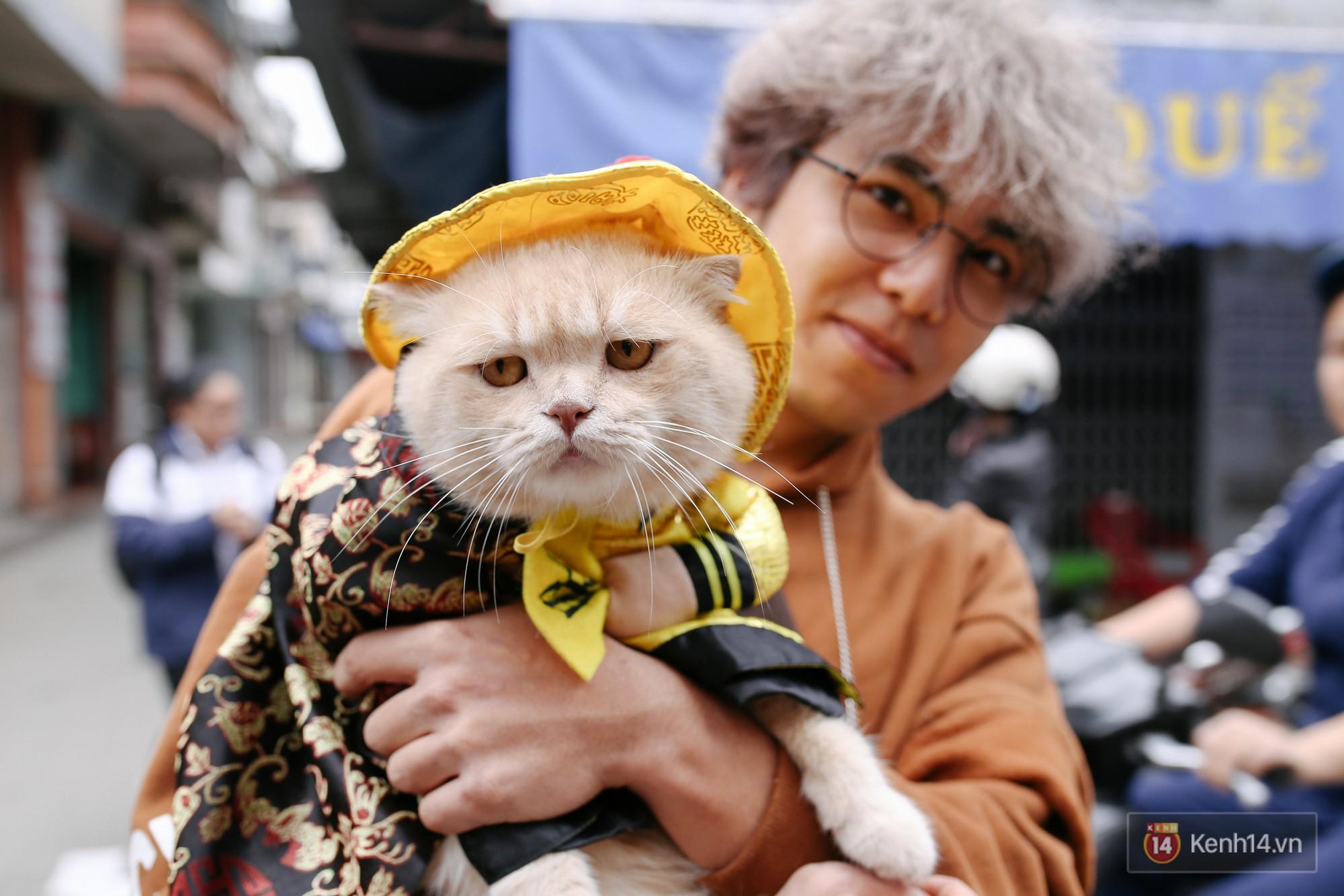 """Về Hải Phòng """"diện kiến"""" chú mèo tên Chó và cậu chủ siêu cute đang nổi danh khắp MXH tây ta - Ảnh 3."""