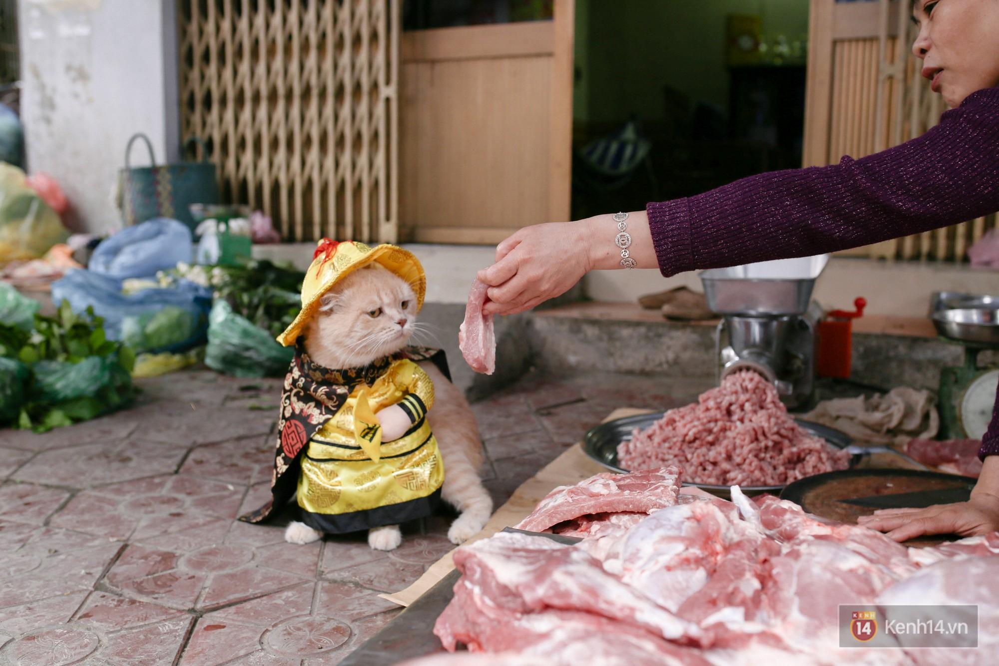 """Về Hải Phòng """"diện kiến"""" chú mèo tên Chó và cậu chủ siêu cute đang nổi danh khắp MXH tây ta - Ảnh 6."""