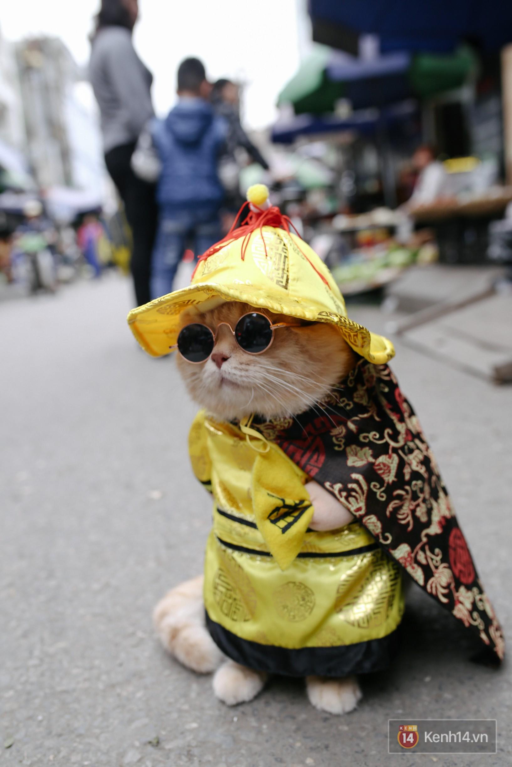 """Về Hải Phòng """"diện kiến"""" chú mèo tên Chó và cậu chủ siêu cute đang nổi danh khắp MXH tây ta - Ảnh 12."""