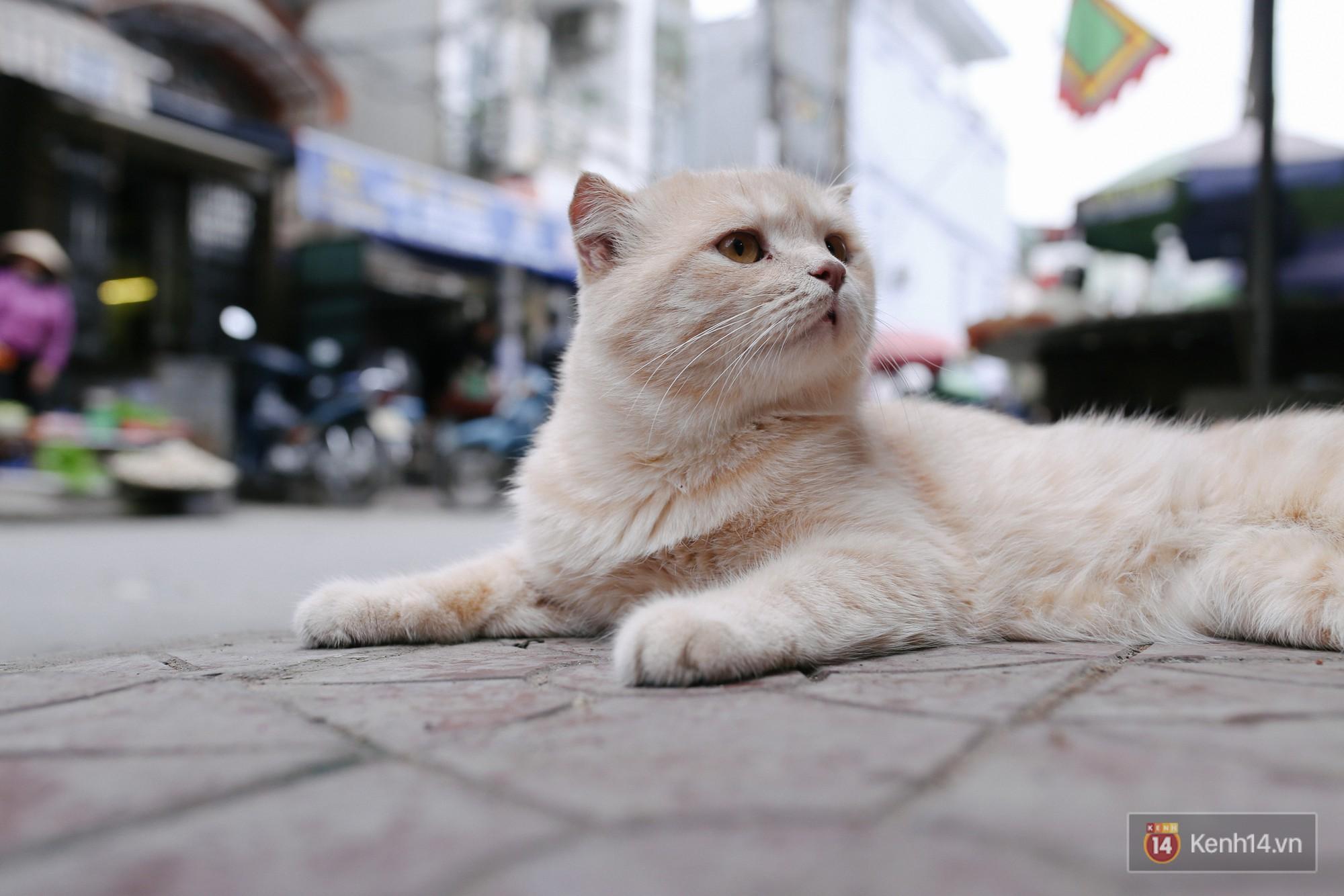 """Về Hải Phòng """"diện kiến"""" chú mèo tên Chó và cậu chủ siêu cute đang nổi danh khắp MXH tây ta - Ảnh 4."""