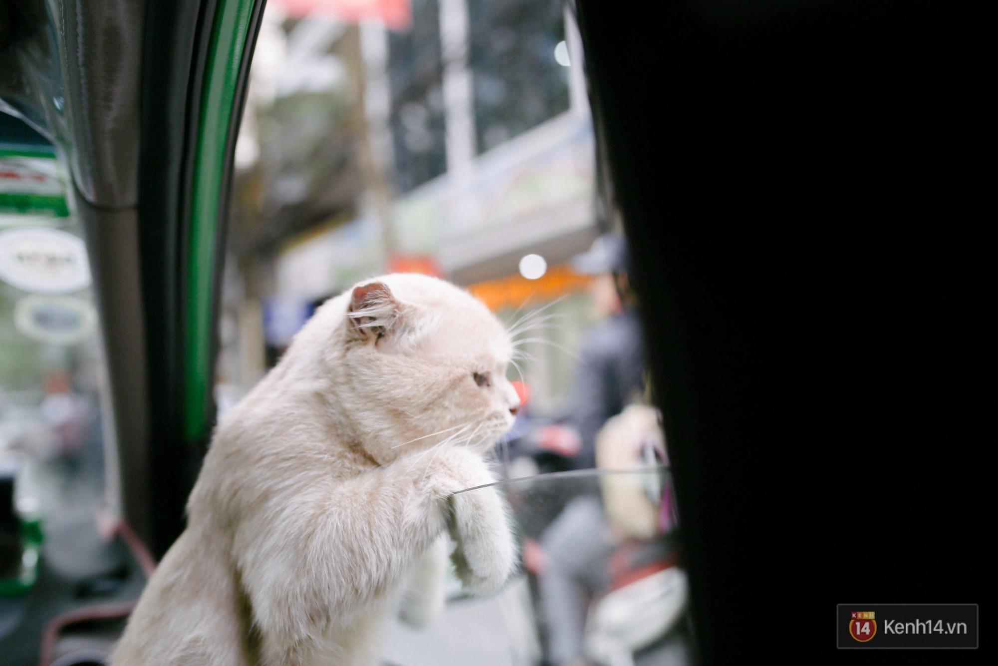 """Về Hải Phòng """"diện kiến"""" chú mèo tên Chó và cậu chủ siêu cute đang nổi danh khắp MXH tây ta - Ảnh 16."""