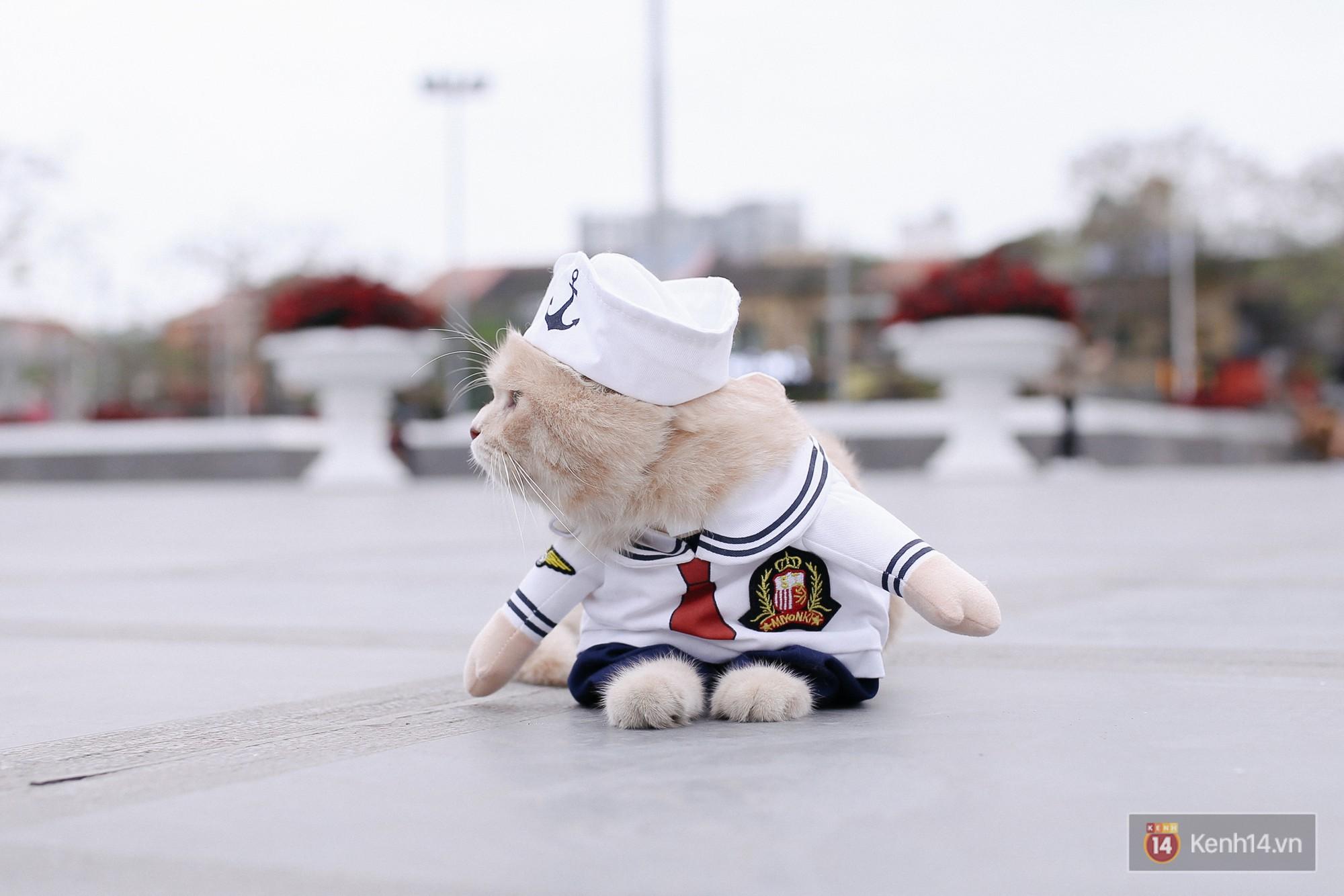 """Về Hải Phòng """"diện kiến"""" chú mèo tên Chó và cậu chủ siêu cute đang nổi danh khắp MXH tây ta - Ảnh 13."""