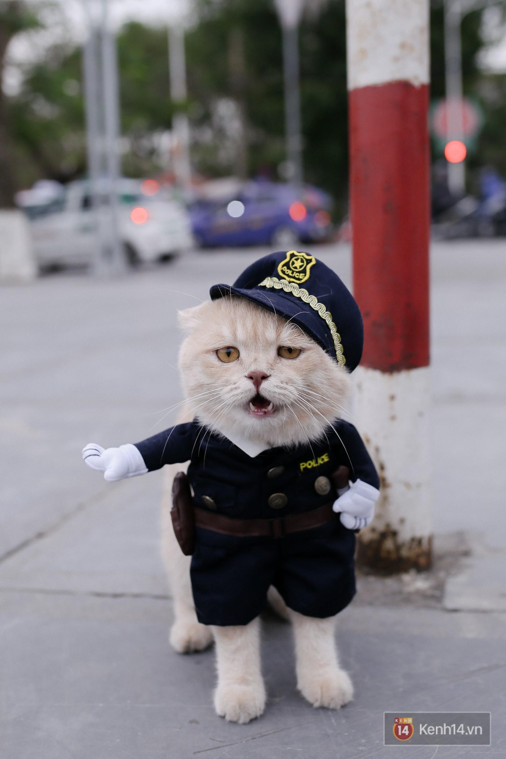 """Về Hải Phòng """"diện kiến"""" chú mèo tên Chó và cậu chủ siêu cute đang nổi danh khắp MXH tây ta - Ảnh 14."""