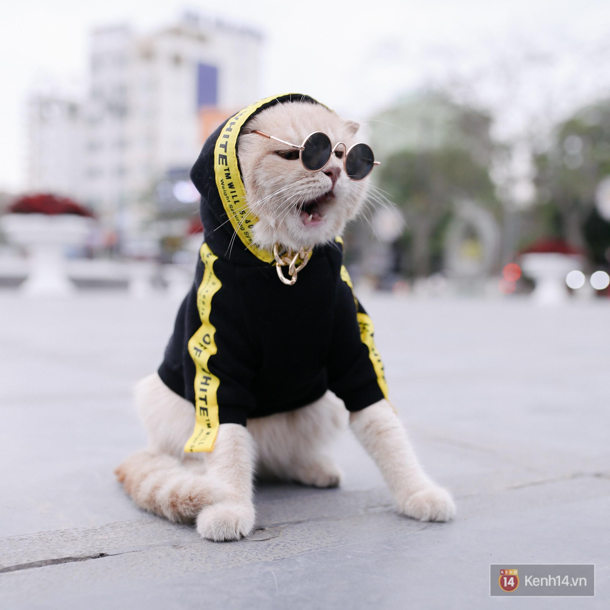 """Về Hải Phòng """"diện kiến"""" chú mèo tên Chó và cậu chủ siêu cute đang nổi danh khắp MXH tây ta - Ảnh 5."""