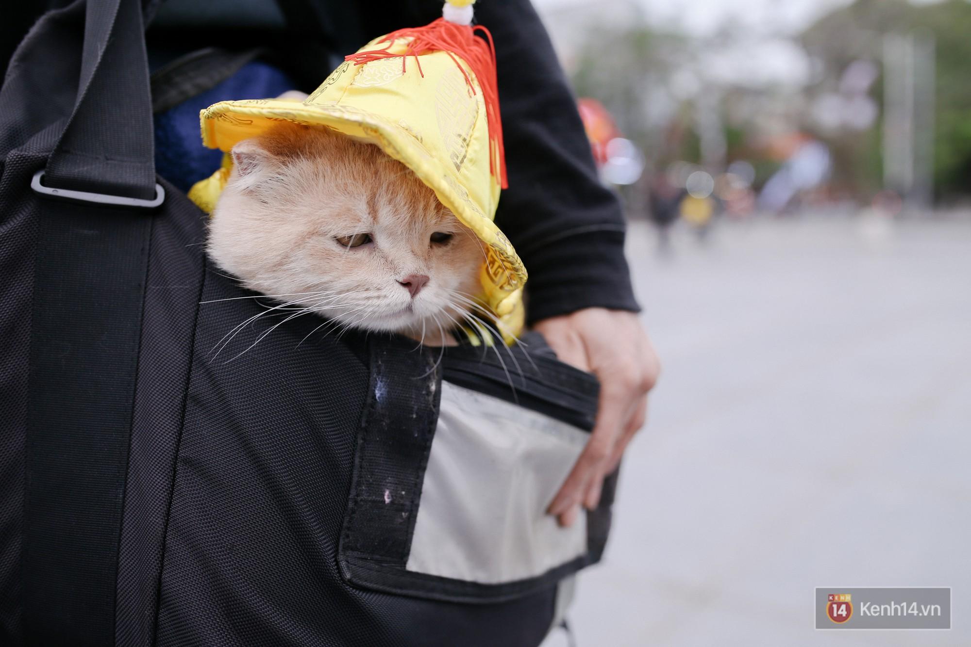"""Về Hải Phòng """"diện kiến"""" chú mèo tên Chó và cậu chủ siêu cute đang nổi danh khắp MXH tây ta - Ảnh 17."""