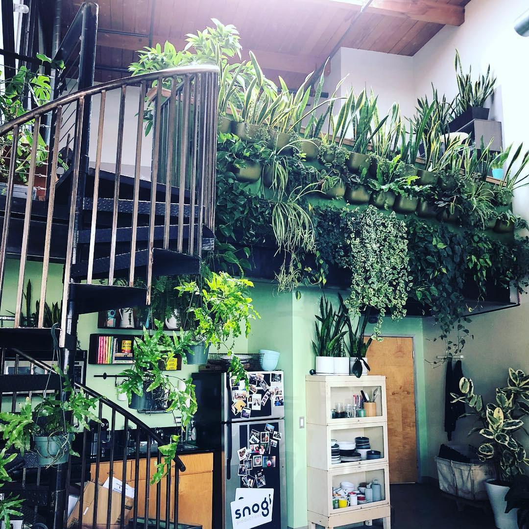 13 góc nhà toàn cây xanh cực xinh giúp bạn lấy lại cảm hứng học tập và làm việc - Ảnh 12.