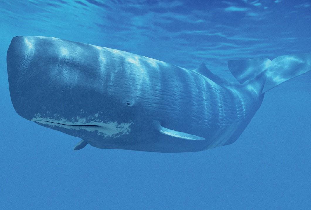 Quốc gia gây tranh cãi nhất 2018: ra quyết định tiếp tục giết và tiêu thụ hàng ngàn con cá voi - Ảnh 3.