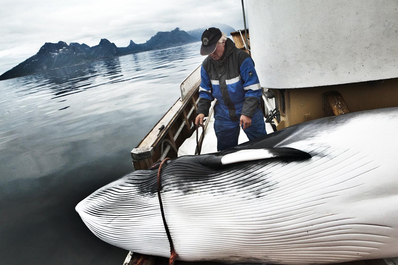 Quốc gia gây tranh cãi nhất 2018: ra quyết định tiếp tục giết và tiêu thụ hàng ngàn con cá voi - Ảnh 2.