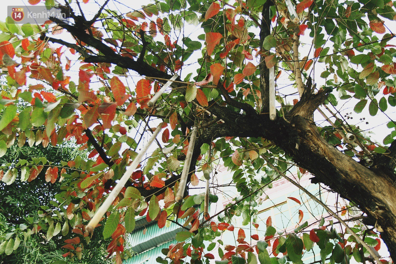 Trong nhiều năm qua, người dân Hà Nội đã đối xử với những hàng cây xanh như thế nào? - Ảnh 4.