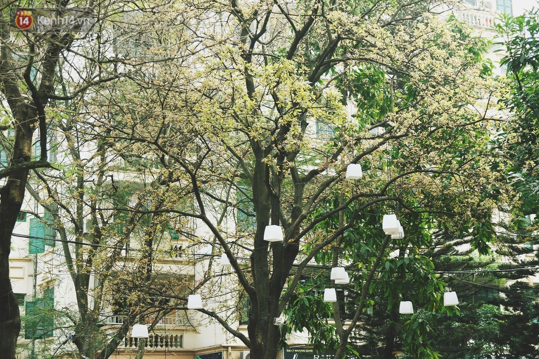 Trong nhiều năm qua, người dân Hà Nội đã đối xử với những hàng cây xanh như thế nào? - Ảnh 9.