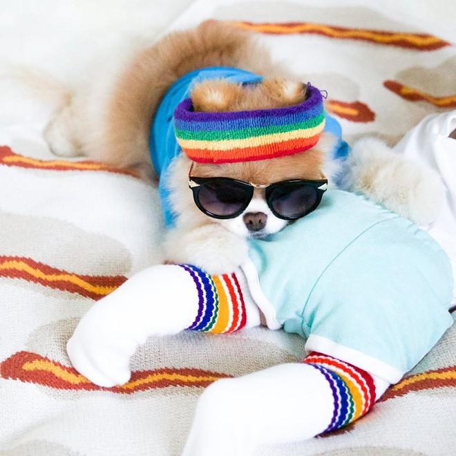 Chú mèo 'Chó' ở Hải Phòng nổi tiếng cũng chưa bằng con chó có 16 triệu theo dõi này - Ảnh 3.