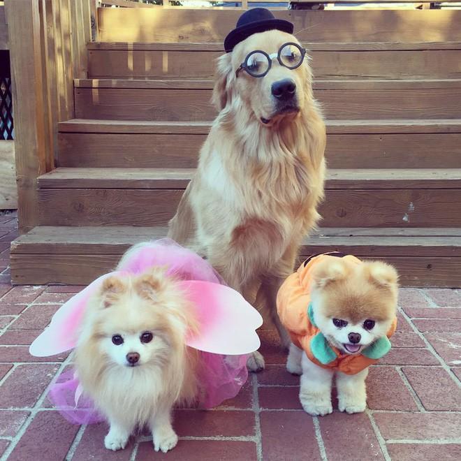 Chú mèo 'Chó' ở Hải Phòng nổi tiếng cũng chưa bằng con chó có 16 triệu theo dõi này - Ảnh 4.