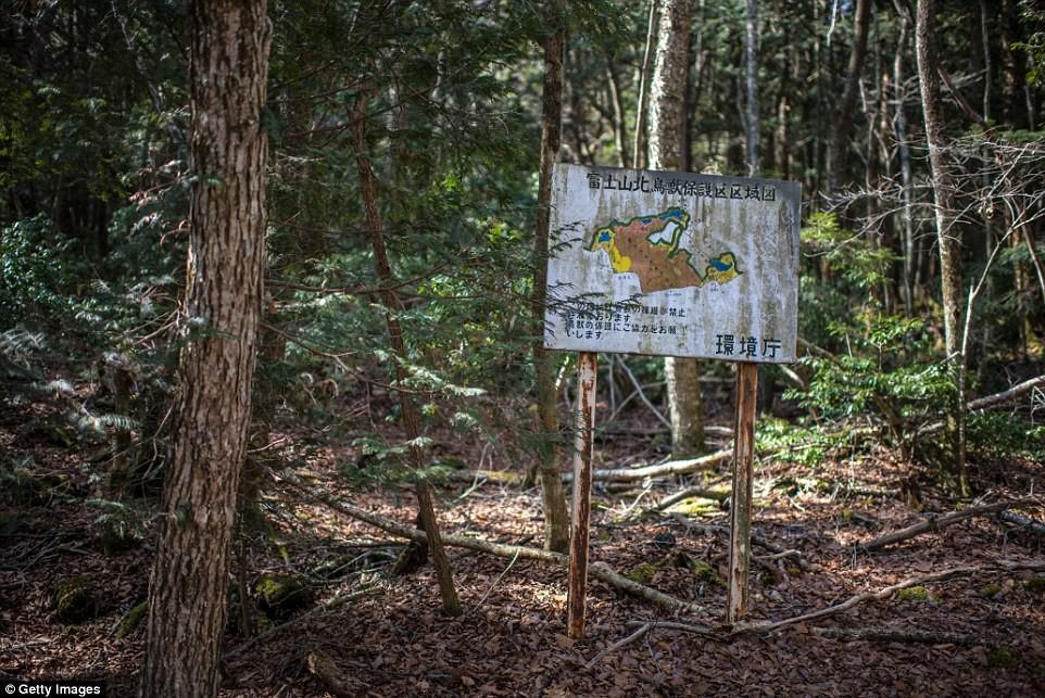 Những bức hình ám ảnh trong khu rừng tự sát: Tỷ lệ tự tử đã giảm ở Nhật nhưng ký ức đau thương vẫn đầy nơi này - Ảnh 1.