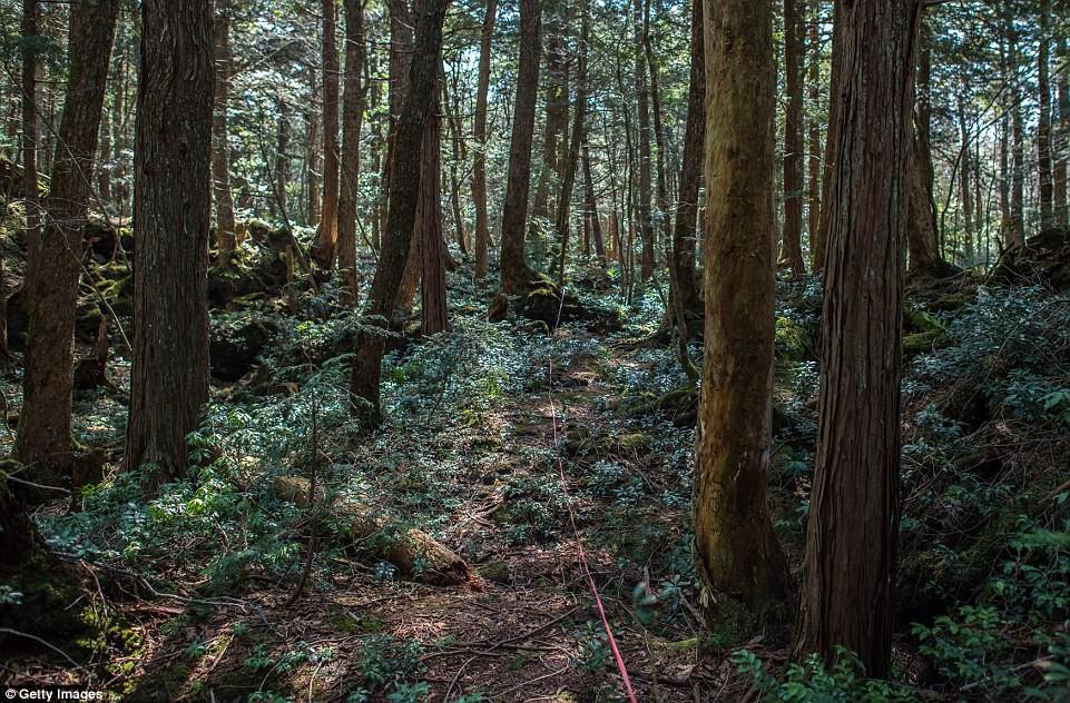 Những bức hình ám ảnh trong khu rừng tự sát: Tỷ lệ tự tử đã giảm ở Nhật nhưng ký ức đau thương vẫn đầy nơi này - Ảnh 2.