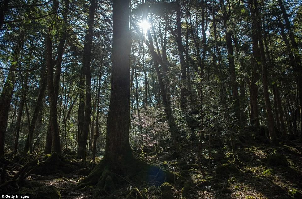 Những bức hình ám ảnh trong khu rừng tự sát: Tỷ lệ tự tử đã giảm ở Nhật nhưng ký ức đau thương vẫn đầy nơi này - Ảnh 9.