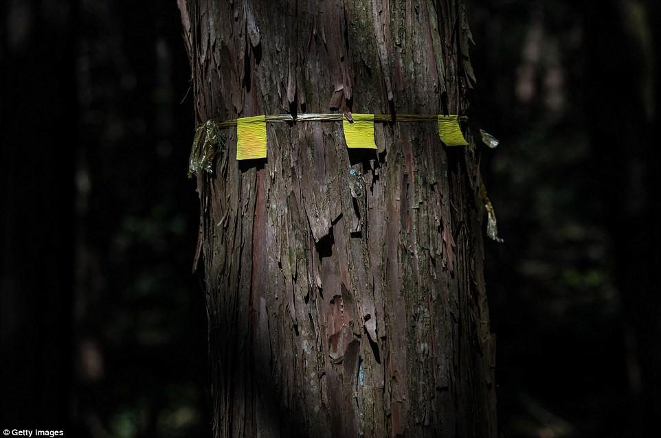 Những bức hình ám ảnh trong khu rừng tự sát: Tỷ lệ tự tử đã giảm ở Nhật nhưng ký ức đau thương vẫn đầy nơi này - Ảnh 11.