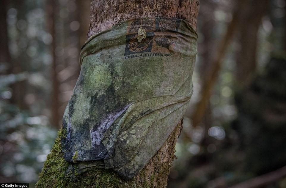 Những bức hình ám ảnh trong khu rừng tự sát: Tỷ lệ tự tử đã giảm ở Nhật nhưng ký ức đau thương vẫn đầy nơi này - Ảnh 12.
