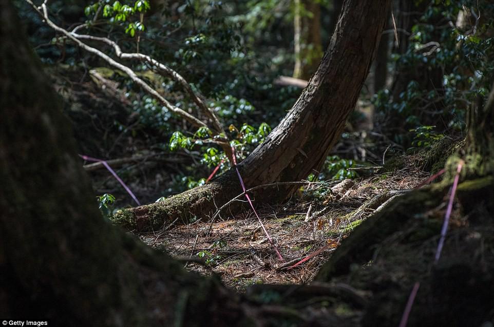 Những bức hình ám ảnh trong khu rừng tự sát: Tỷ lệ tự tử đã giảm ở Nhật nhưng ký ức đau thương vẫn đầy nơi này - Ảnh 3.