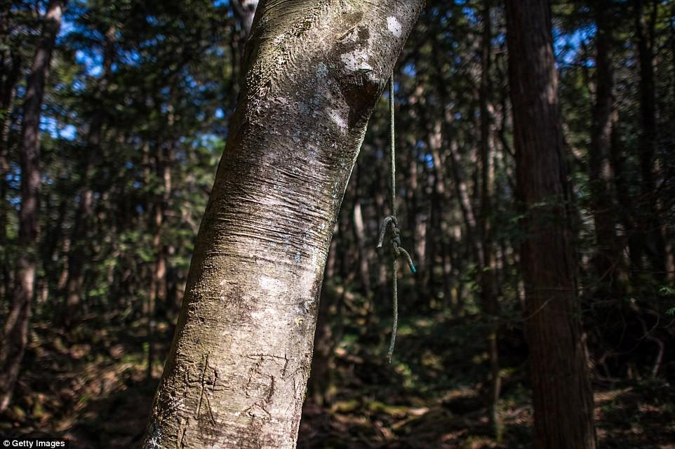 Những bức hình ám ảnh trong khu rừng tự sát: Tỷ lệ tự tử đã giảm ở Nhật nhưng ký ức đau thương vẫn đầy nơi này - Ảnh 15.