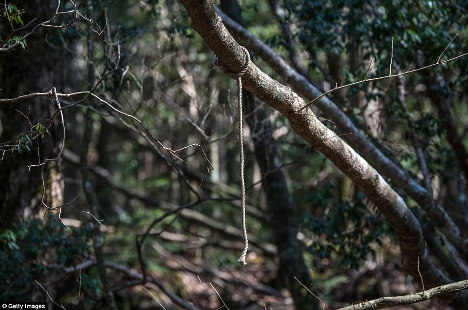 Những bức hình ám ảnh trong khu rừng tự sát: Tỷ lệ tự tử đã giảm ở Nhật nhưng ký ức đau thương vẫn đầy nơi này - Ảnh 17.