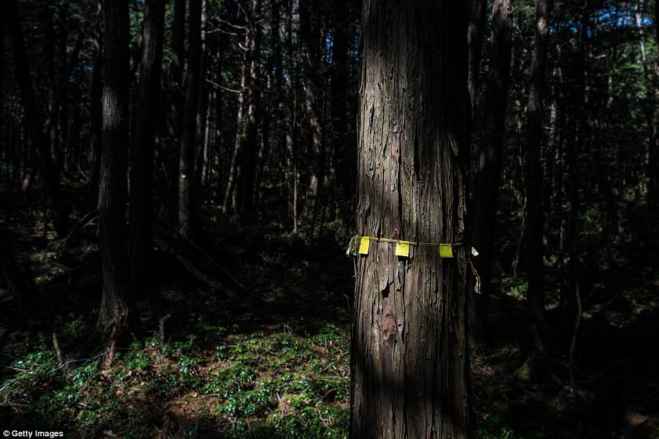 Những bức hình ám ảnh trong khu rừng tự sát: Tỷ lệ tự tử đã giảm ở Nhật nhưng ký ức đau thương vẫn đầy nơi này - Ảnh 5.