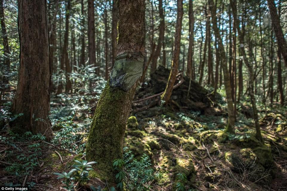 Những bức hình ám ảnh trong khu rừng tự sát: Tỷ lệ tự tử đã giảm ở Nhật nhưng ký ức đau thương vẫn đầy nơi này - Ảnh 6.